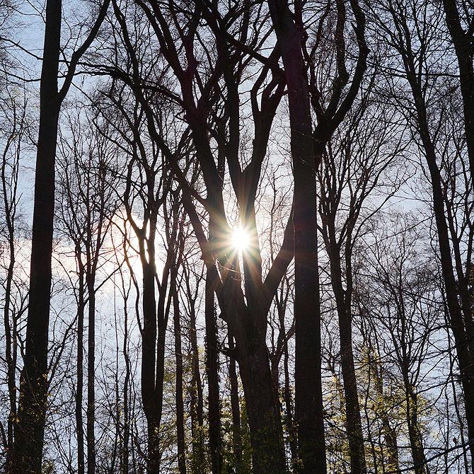 Sonnenschein in der Eifel