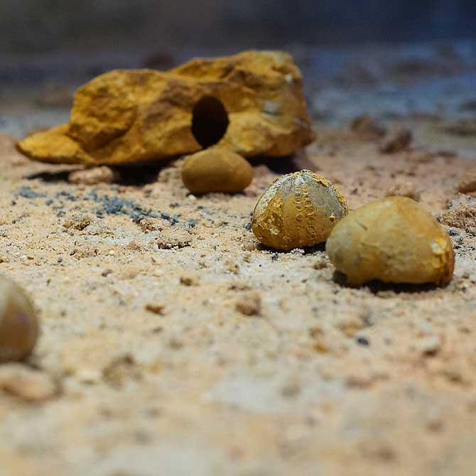 Fossilien im SMAC Chemnitz