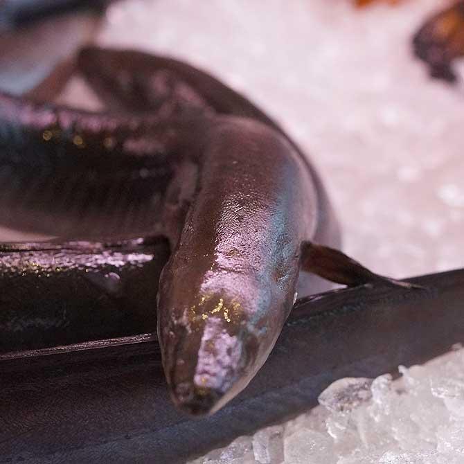 Aal im Fischereihof Mirow in der Auslage