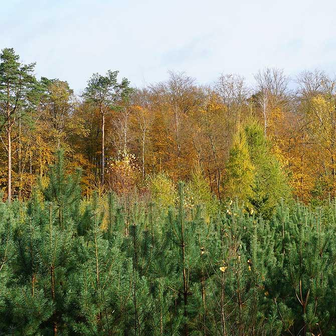 Mischwald, keine Monokultur