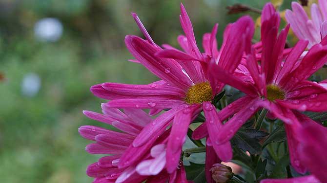 Schöne Blume, aber ich kenne ihren Namen nicht
