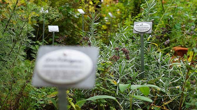 Viele Kräuter im Garten