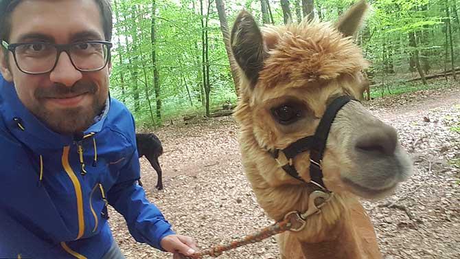 Ich und mein Liebling bei meiner Alpaka Wanderung um Rodenbach