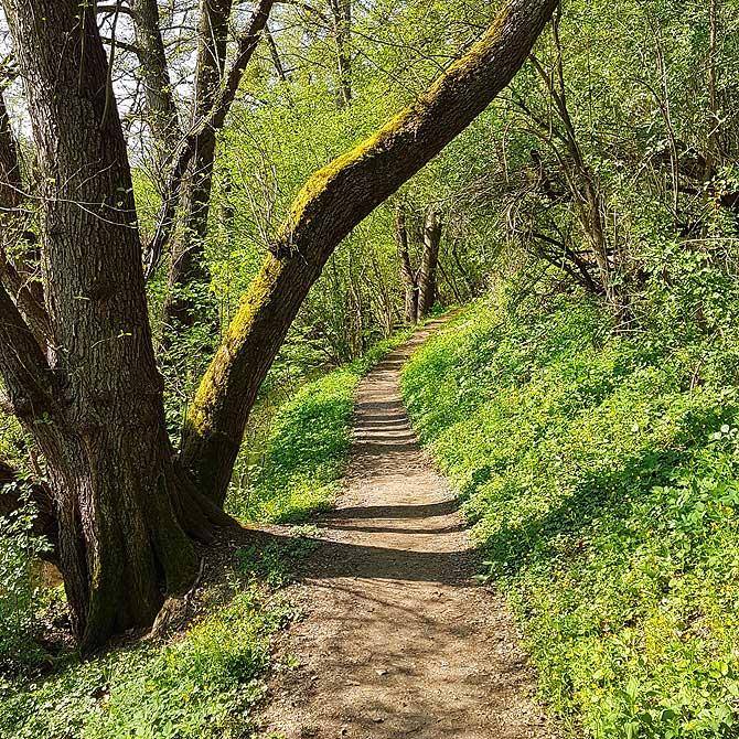 Schöner Wanderweg bei Brodenbach