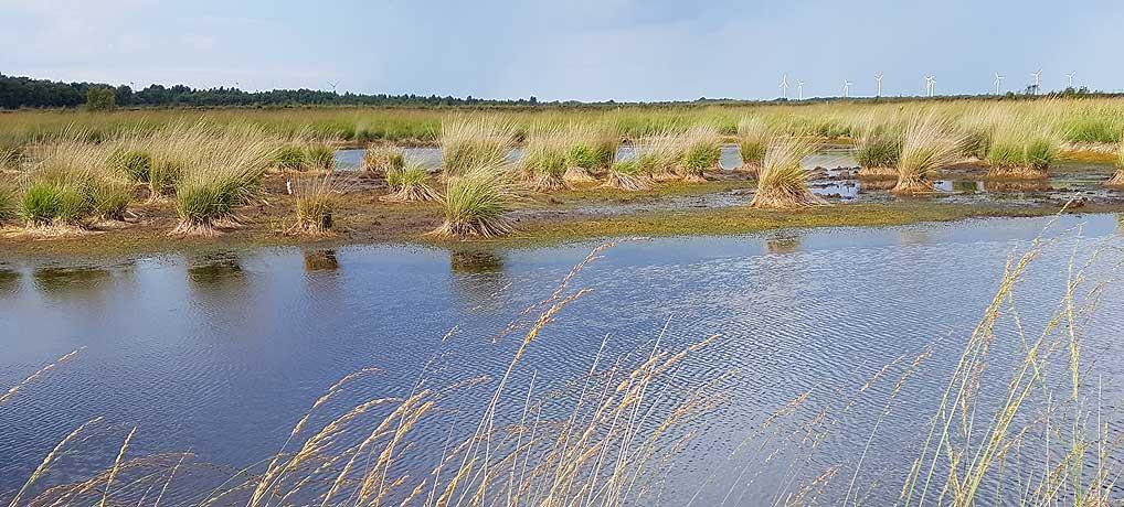 Das Stapeler Moor ist ein Naturschutzgebiet im friesischen Uplengen in Ostfriesland