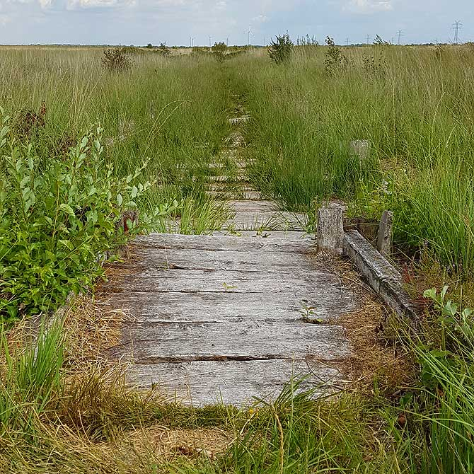 Lieber auf dem Bohlenweg statt auf dem Holzweg