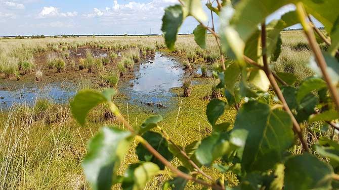 Naturschutzgebiet Stapeler Moor bei Uplengen