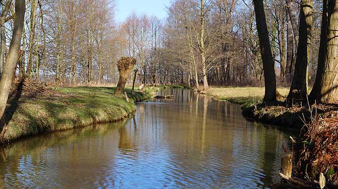 Viel Natur bei der Kahnfahrt im Spreewald