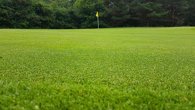 Feinstes Green im Golfclub Schloss Holte Stukenbrock