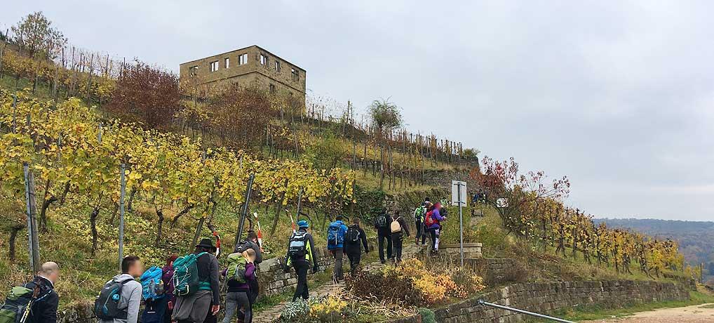 Der Megamarsch Stuttgart ist die 50 km Variante der 100 km Wanderungen