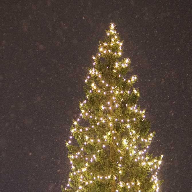 Große Tanne als Weihnachtsbaum