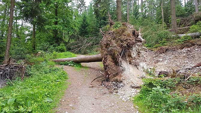 Sturm Friederike auf dem Hermannsweg