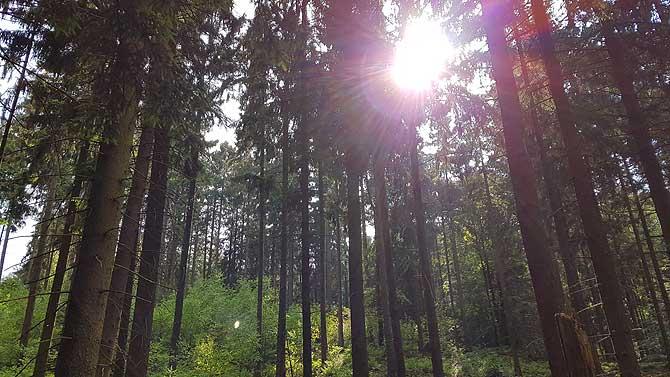 Sonne im Teutoburger Wald