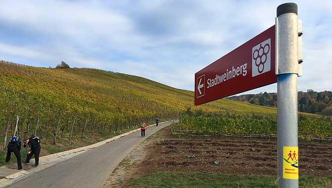 Stadtweinberg