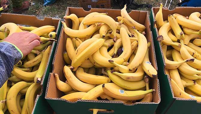 Bananen an der Verpflegungsstationen