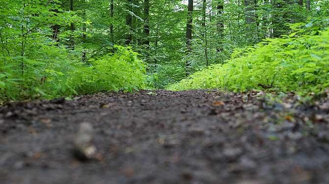 Schöner Waldboden im Spessartbogen