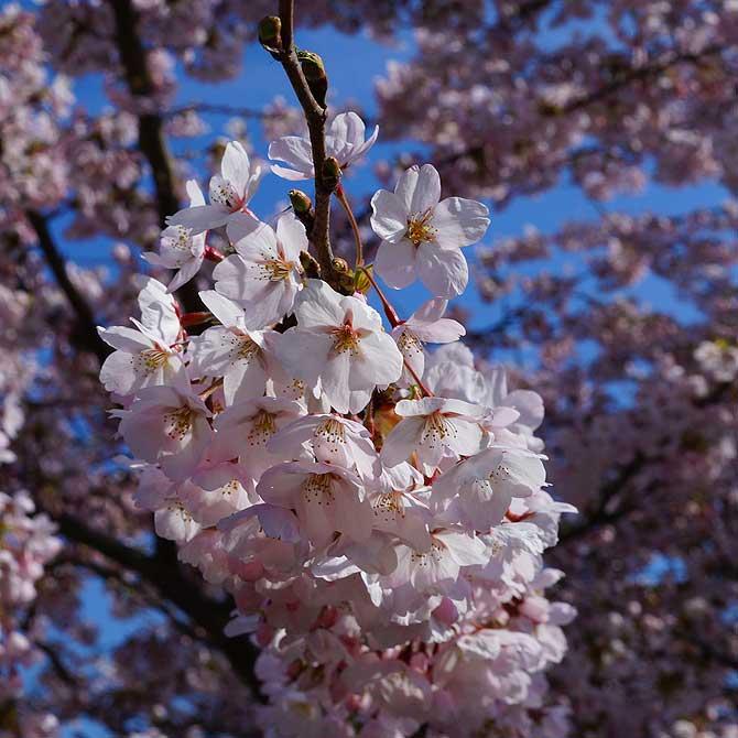 Leicht weiße Blumen