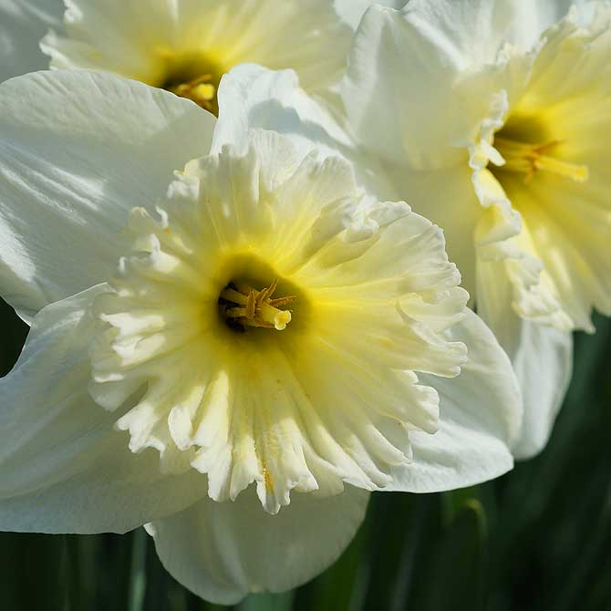 Leicht gelbe Blumen