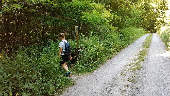 Wald und Weg gleich Waldweg