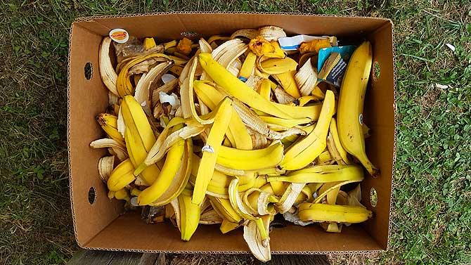 Bananen und noch mehr gelbe Schale