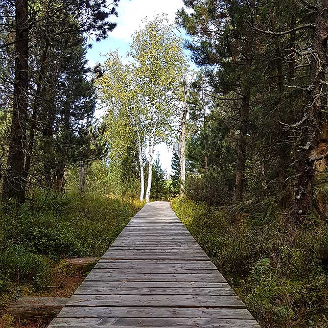 Holzweg mit Holzsteg