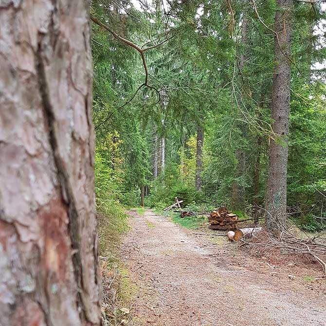 Schöner Wald, mehr grün statt schwarz
