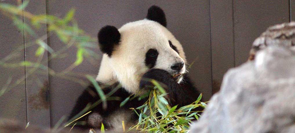 Der Berliner Zoo ist eine der beliebtesten Sehenswürdigkeiten in Berlin