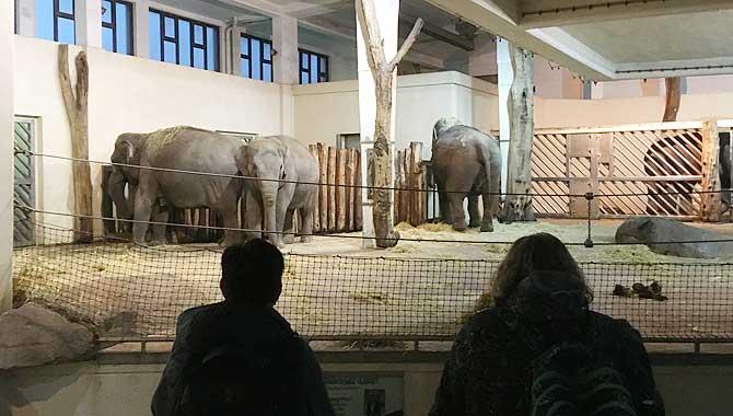 Elefantenhaus Zoo Berlin