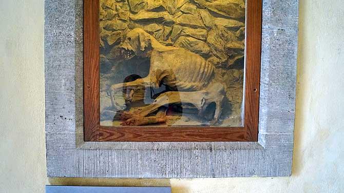 Mumifizierte Hund in Schloss Burgk