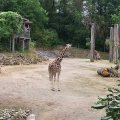 Der Osnabrücker Zoo ist ein beliebtes Ausflugsziel im Osnabrücker Land