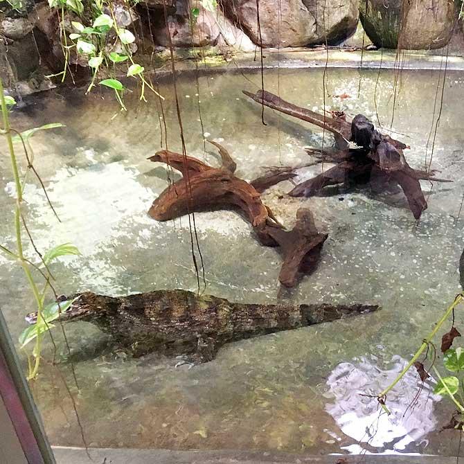 Reptilien im Osnabrücker Zoo
