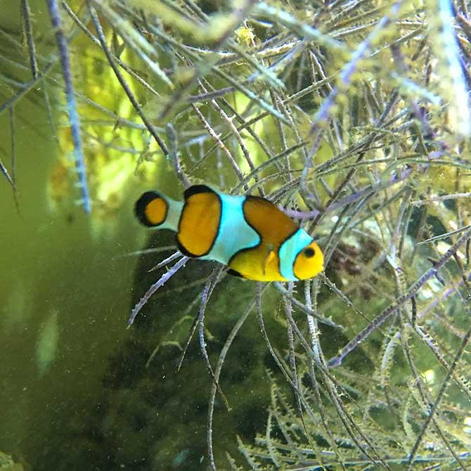 Auch Nemo lebt im Zoo in Osnabrück