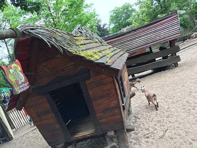 Toller Streichelzoo im Osnabrücker Zoo