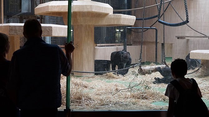 Affenhaus im Zoo Münster