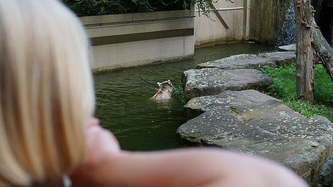 Da schwimmt es