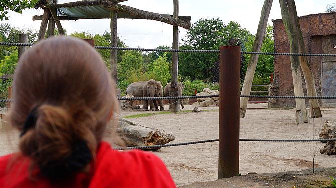 Elefanten sind anmutige Tiere
