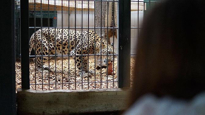 Ist das ein Leopard?
