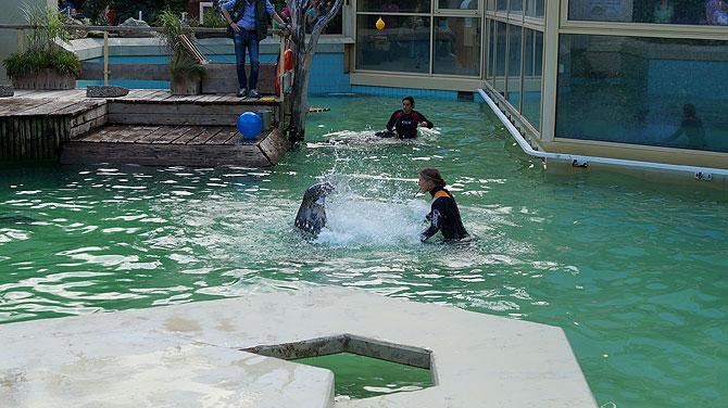 Robbenhaven ist die Robbenwelt
