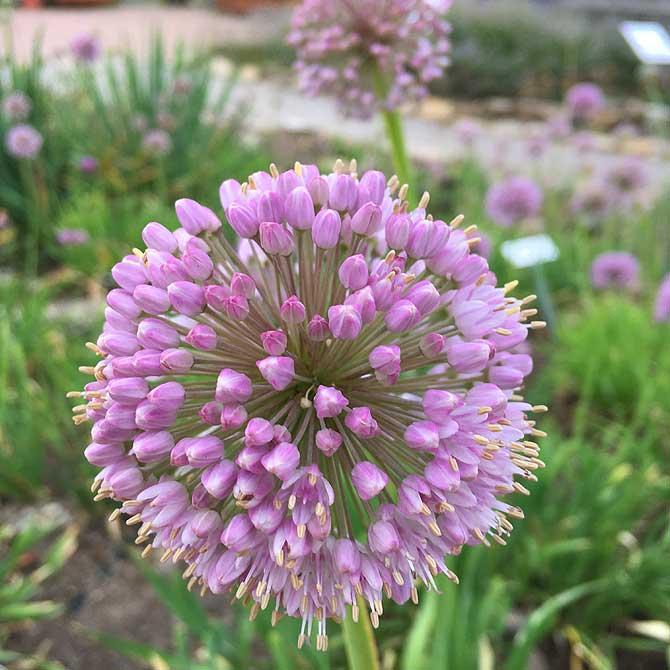 Schöne Pflanze im Botanischen Garten