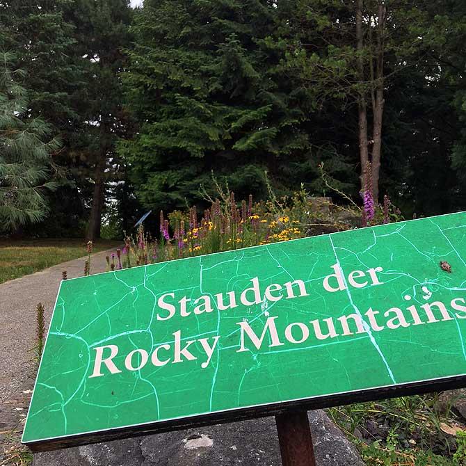 Stauden der Rocky Mountains