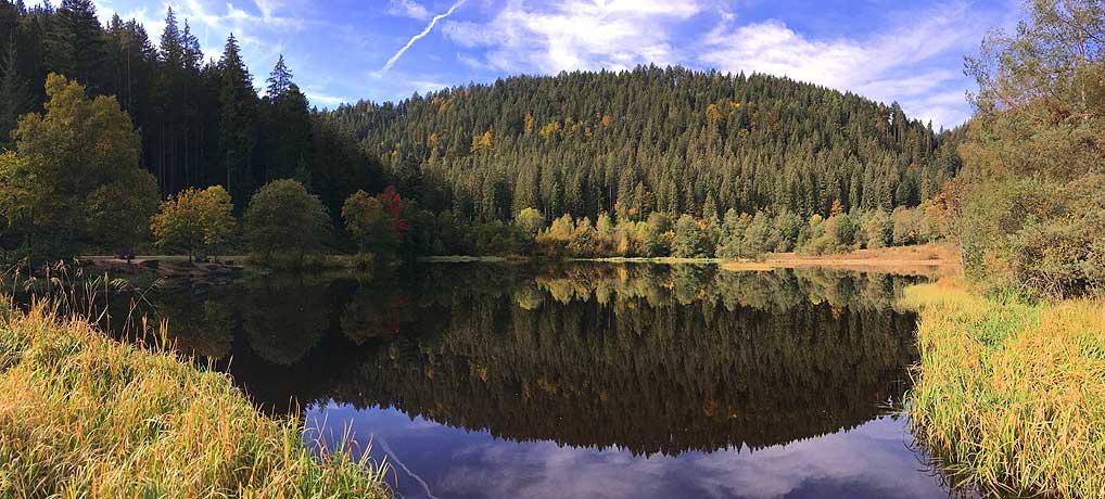 Der Sankenbachsteig ist ein tolles Wander-Ausflugsziel im Schwarzwald