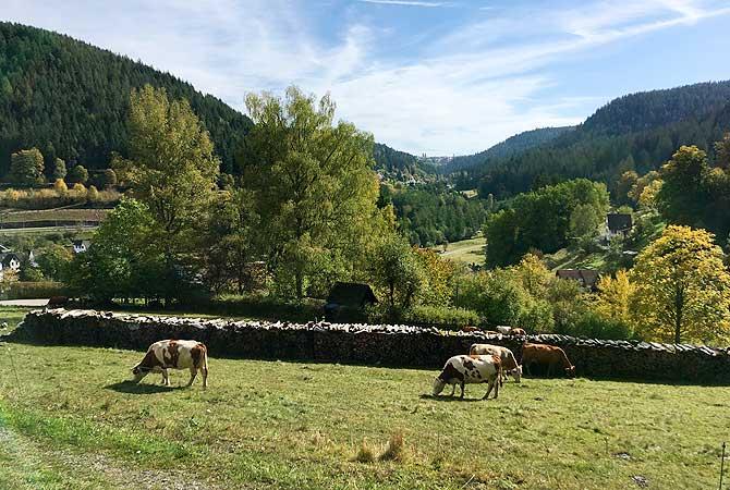 Blick ins Forbachtal