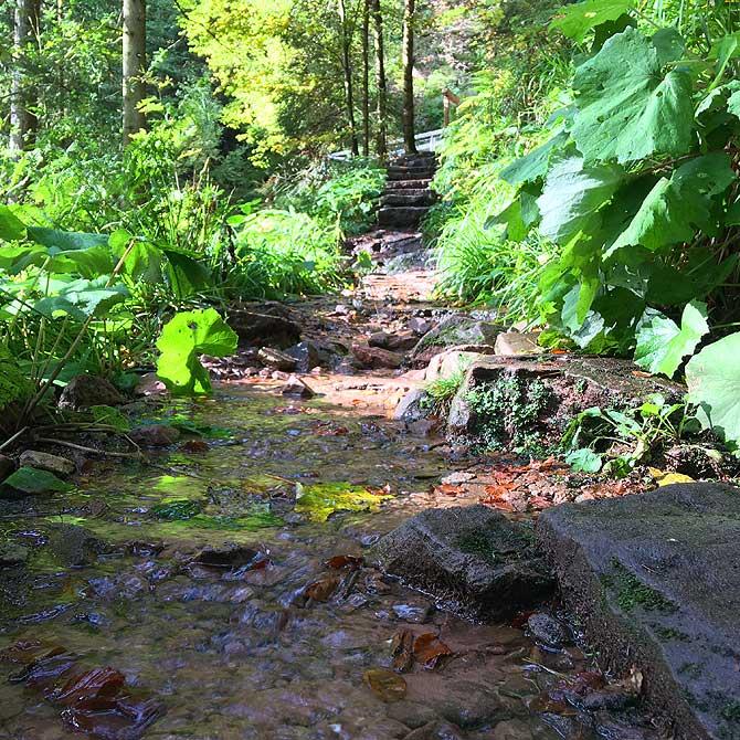 Weg vom Wasserfall zur Hütte