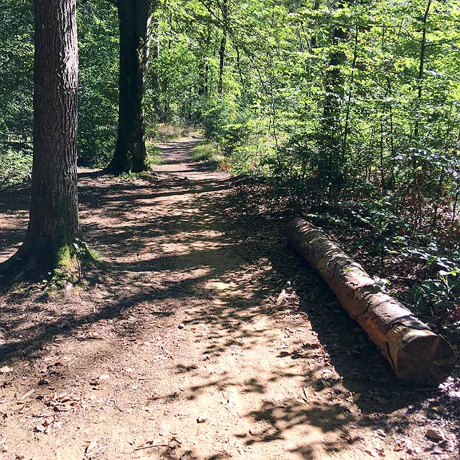 Schöner Wald an der Prießnitz
