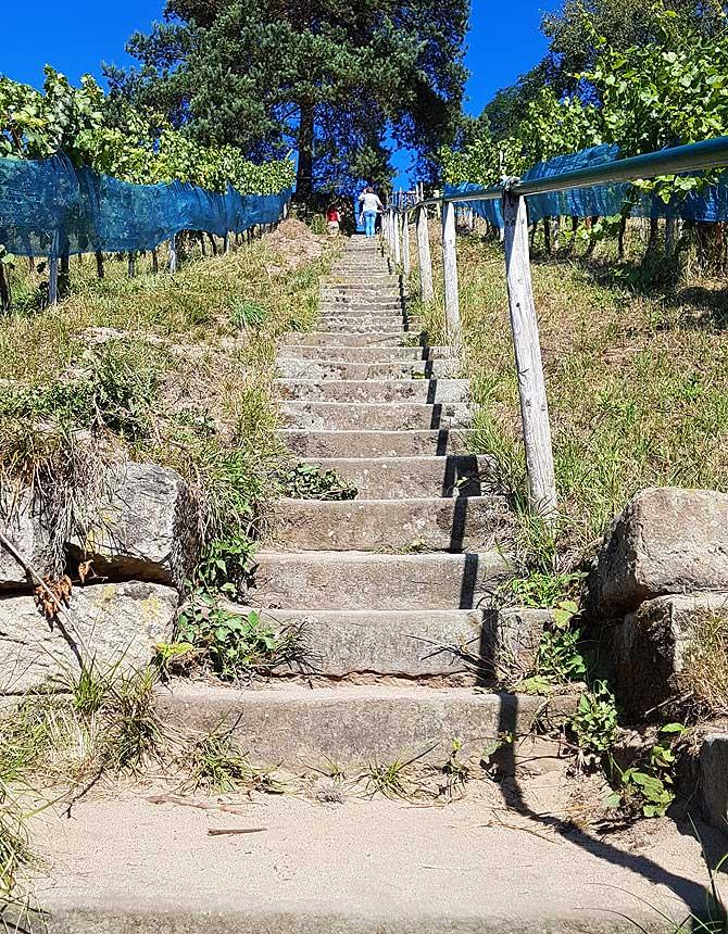 Weinberg Winzer Stufen
