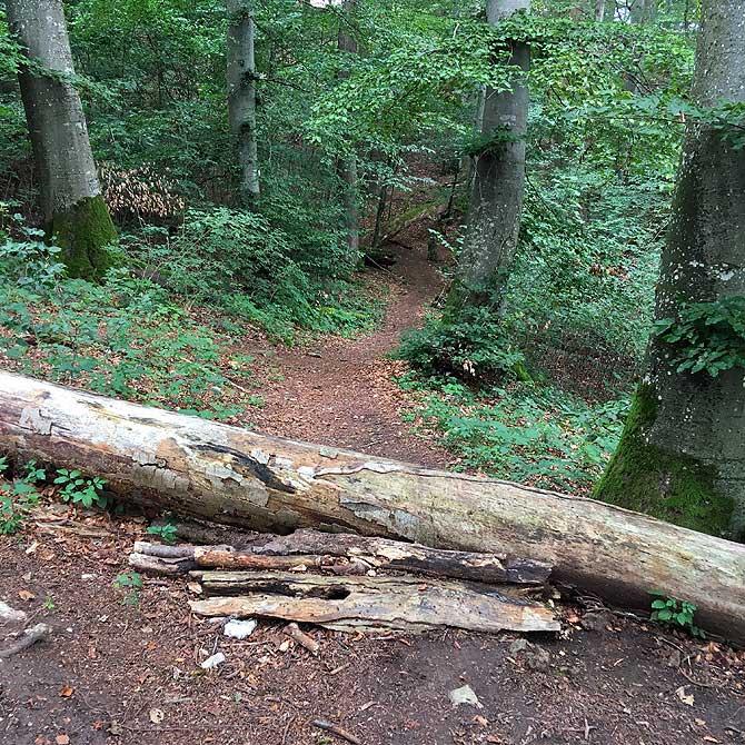 Baum auf Wanderweg