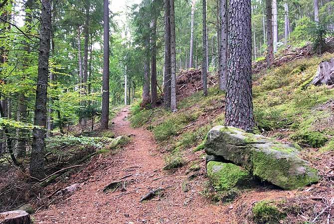Wanderung auf dem Waldweg