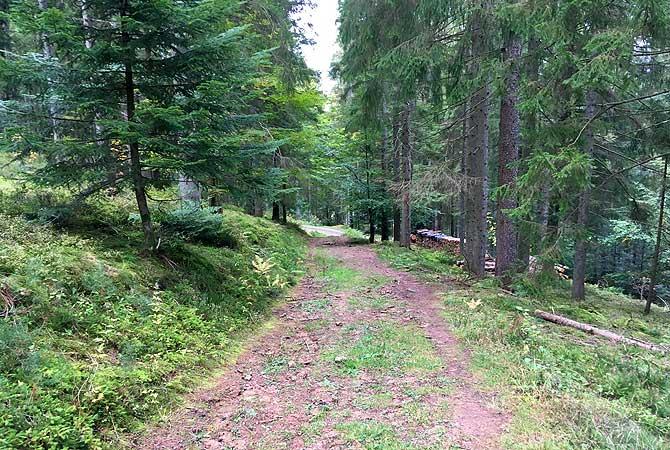 Wanderweg bei Baiersbronn