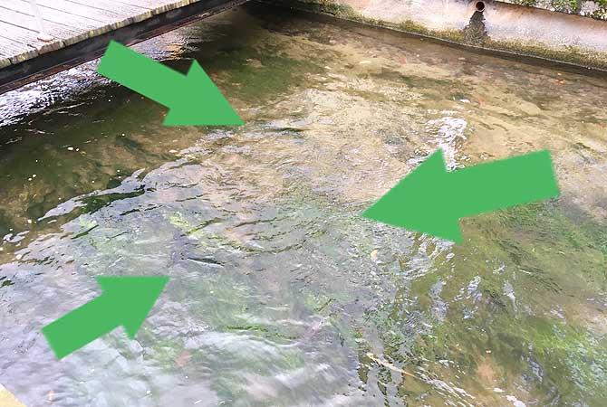 Wer hat den dicksten Fisch im Teich?
