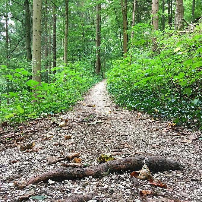 Typischer Wanderweg auf dem Hohenurachsteig